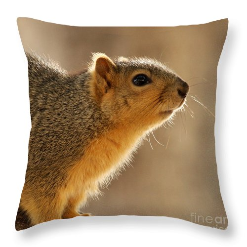 Squirrel Throw Pillow featuring the photograph Just Curious by Bob and Jan Shriner