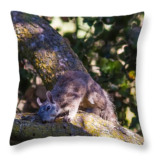Grey Squrriel Trees Outdoors Wildlife All Prints Are Available In Prints Throw Pillow featuring the photograph 1 Large Grey Squrriel by Brian Williamson
