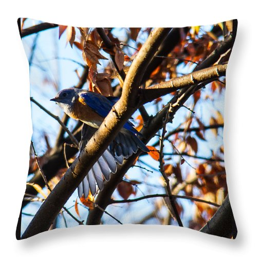 Birds Throw Pillow featuring the photograph Lazuli Bunting by Brian Williamson