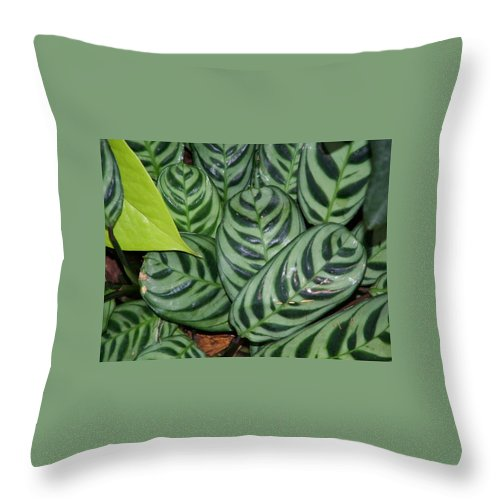 Plant Throw Pillow featuring the photograph Light And Dark Green Leaves by Geoffrey McLean