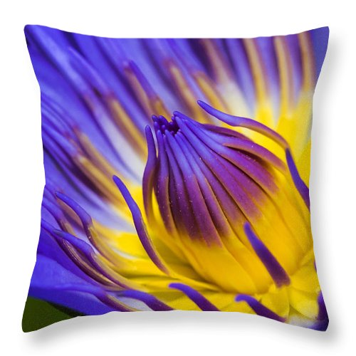 Water Lilly Purple Floral Water Pond Throw Pillow featuring the photograph Lilly by James Roemmling