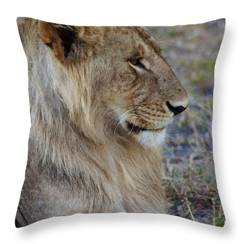 Lion Throw Pillow featuring the photograph Lion by Amanda Stadther