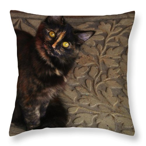 Golden Eyed Cat Throw Pillow featuring the photograph Look Into My Eyes by Marilyn MacCrakin