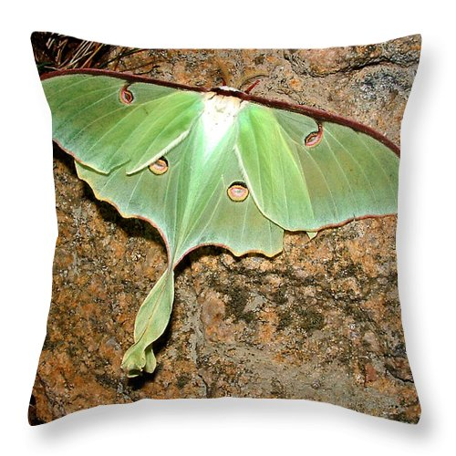 Luna Throw Pillow featuring the photograph Luna Moth by Tanya Hamell