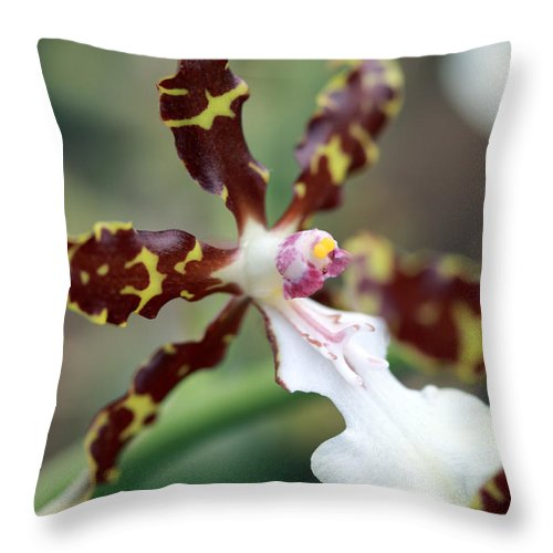 Flowers Throw Pillow featuring the photograph Macro Orchid by Mary Haber
