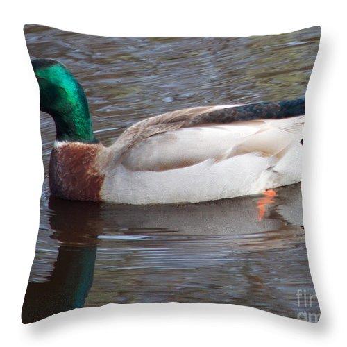 Mallard Throw Pillow featuring the photograph Mallard Duck by Tina Wentworth