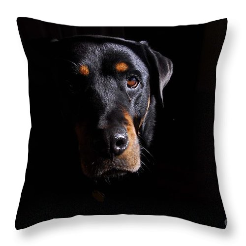 Dogs Throw Pillow featuring the photograph Mandy by Cindy Manero
