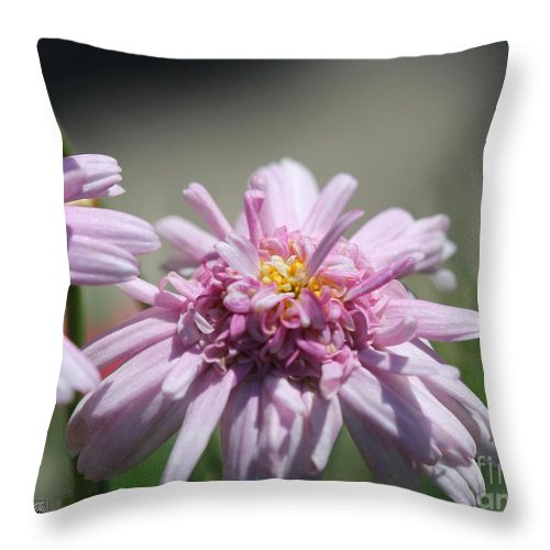 Mccombie Throw Pillow featuring the photograph Marguerite Daisy Named Double Pink by J McCombie