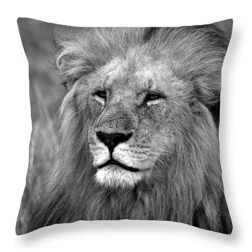 Lion Throw Pillow featuring the photograph Masai Mara Lion by Aidan Moran