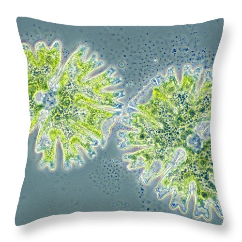 Biology Throw Pillow featuring the photograph Micrasterias by Michael Abbey