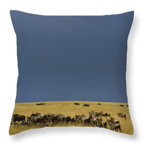 Africa Throw Pillow featuring the photograph Migrating Wildebeests by John Shaw