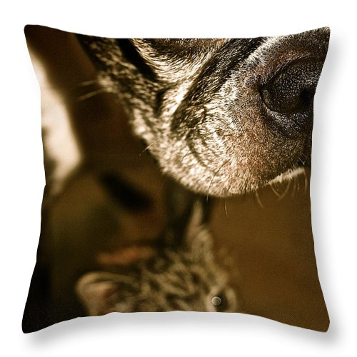 Animal Throw Pillow featuring the photograph Mine by Susan Herber