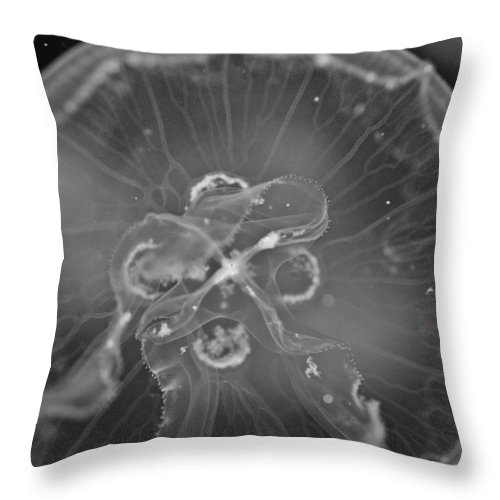 Moon Jelly Throw Pillow featuring the photograph Moon Jellyfish - Black And White by Marianna Mills