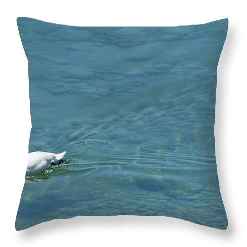 Lahay Creative Throw Pillow featuring the photograph Mute Swan by Andrew Lahay