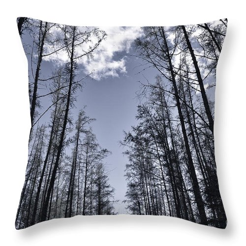 Forest Throw Pillow featuring the photograph North Woods Forest by Birgit Tyrrell