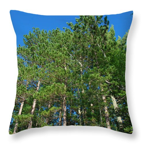 North Throw Pillow featuring the photograph North Woods Tree Line by Birgit Tyrrell