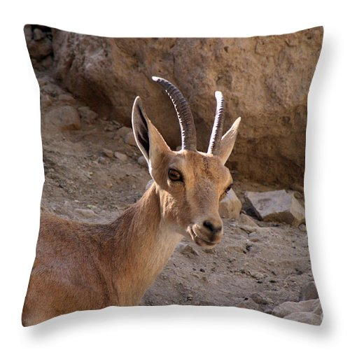 Jerusalem Throw Pillow featuring the photograph Nubian Ibex by Doc Braham