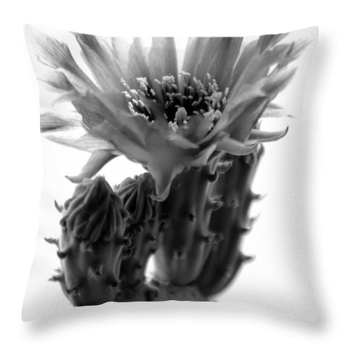 Flower Throw Pillow featuring the photograph Opuntia Basilaris Cactus by Nathan Abbott