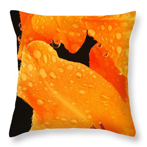 Day Lily Throw Pillow featuring the photograph Orange Blossom Special by Paul W Faust - Impressions of Light