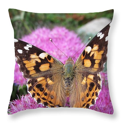 Painted Lady Throw Pillow featuring the photograph Painted Lady Butterfly Up Close by MTBobbins Photography