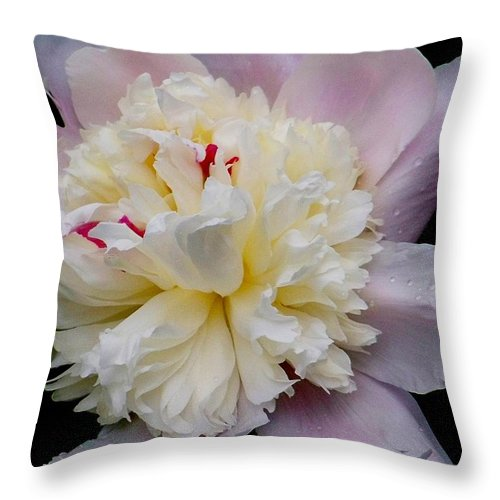 Peony Throw Pillow featuring the photograph Peony by Julie Grace