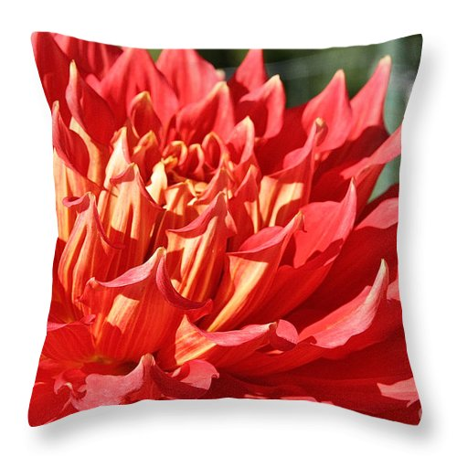 Flower Throw Pillow featuring the photograph Pink Points by Susan Herber