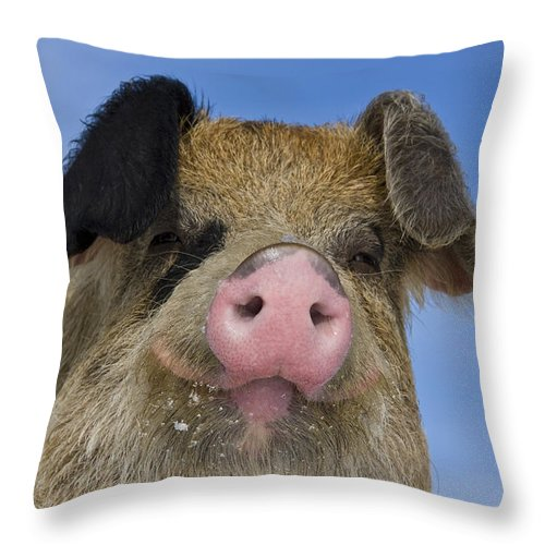 Boar Throw Pillow featuring the photograph Portrait Of A Boar by Jean-Louis Klein and Marie-Luce Hubert