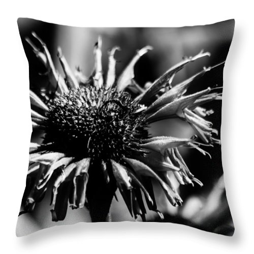 Flower Throw Pillow featuring the photograph Pretty In Pink by Lauri Novak