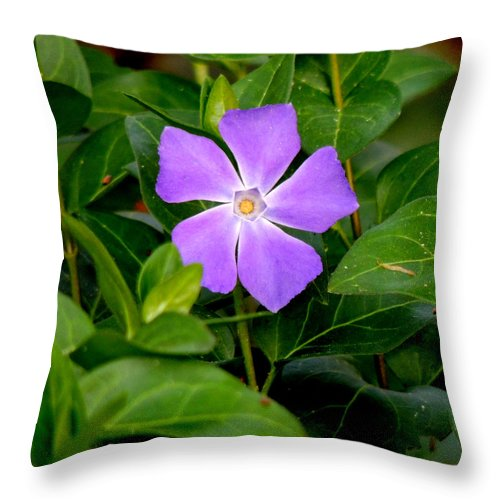Digital Photography Throw Pillow featuring the photograph Pretty Purple Pinwheel by Kim Pate
