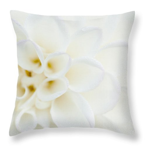 Dahlia Throw Pillow featuring the photograph Purity by Beve Brown-Clark Photography