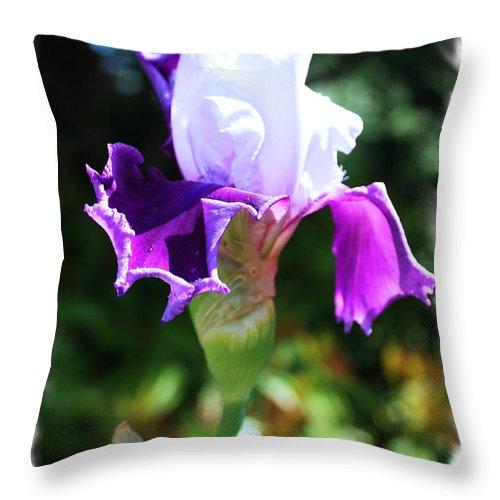 Flowers Throw Pillow featuring the photograph Purple Iris by Steven Baier