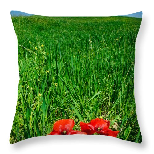 Buonconvento Throw Pillow featuring the photograph Red Poppies And Oak by Michael Blanchette