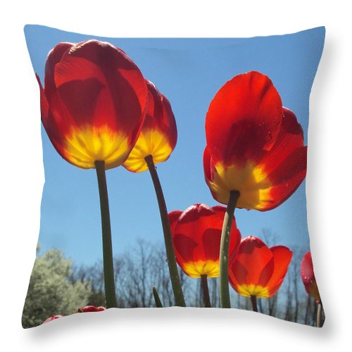 Red Throw Pillow featuring the photograph Red Tulips With Blue Sky Background by Jennifer Wenzel