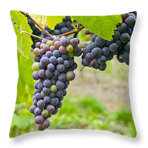 Red Wine Throw Pillow featuring the photograph Red Wine Vineyard 2 by David Gn