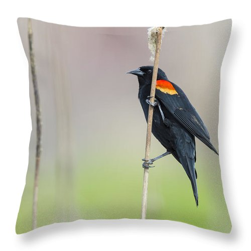 Nature Throw Pillow featuring the photograph Red-winged Blackbird On Cattail by John Shaw