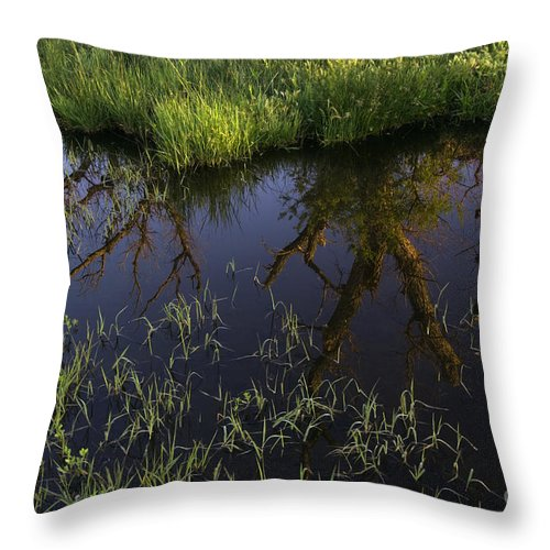 Reflection Throw Pillow featuring the photograph Reflection by John Shaw
