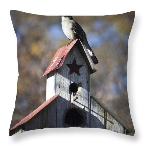 Northern Mockingbird Throw Pillow featuring the photograph Resting by Teresa Mucha