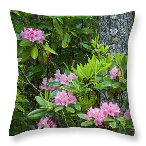 Pacific Rhododendron Throw Pillow featuring the photograph Rhododendron by John Shaw