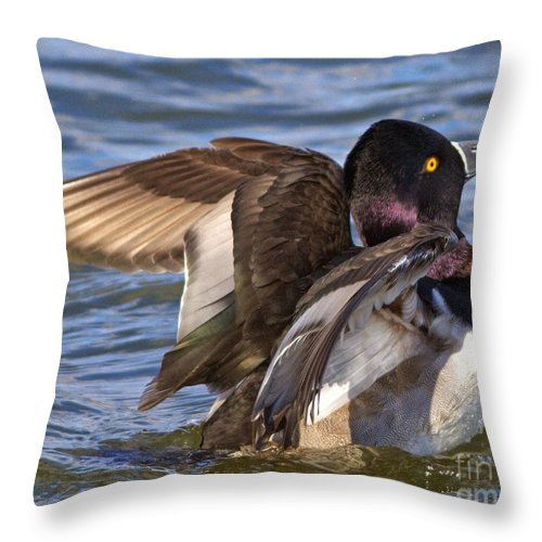 Mallard Throw Pillow featuring the photograph Ring Neck Duck by Kevin Pugh