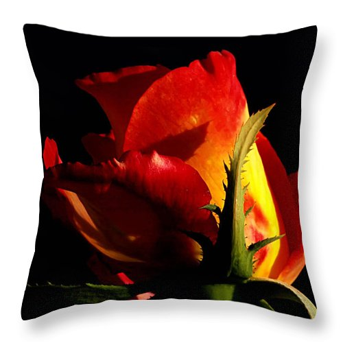 Rose Throw Pillow featuring the photograph Rising Rose by Camille Lopez
