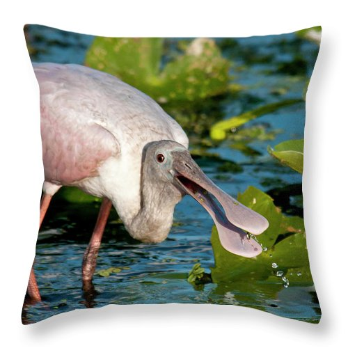 Animal Themes Throw Pillow featuring the photograph Roseate Spoonbill by Mark Newman