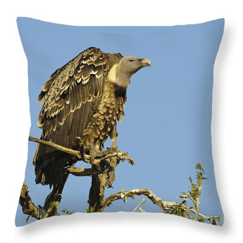 African Fauna Throw Pillow featuring the photograph Rueppells Vulture by John Shaw
