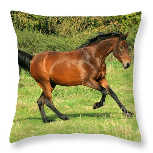 Horse Throw Pillow featuring the photograph Run Run by Angel Ciesniarska