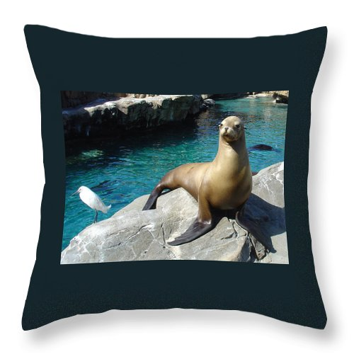 Sea World Throw Pillow featuring the photograph Salty by David Nicholls