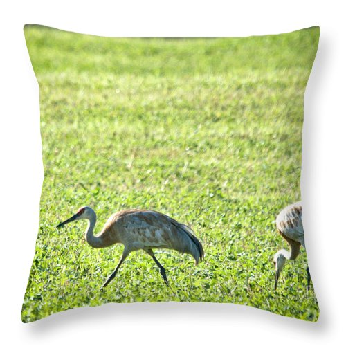 Sandhill Cranes Throw Pillow featuring the photograph Sandhill Cranes by Cheryl Baxter