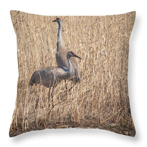 Sandhill Cranes Throw Pillow featuring the photograph Sandhill Cranes by Ronald Grogan