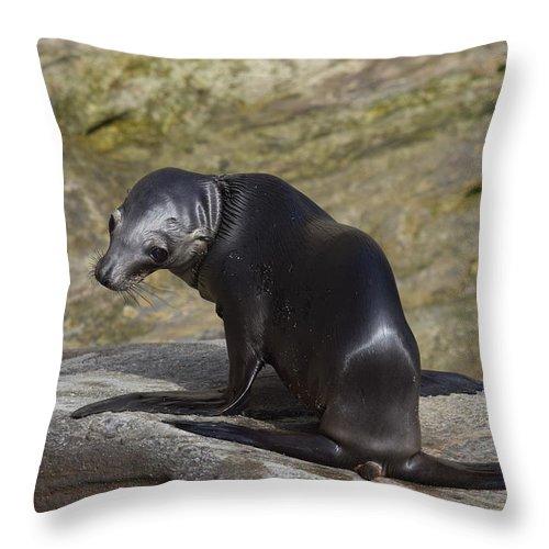 Sea Lion Pup Throw Pillow featuring the photograph Sea Lion Pup by Eric Johansen