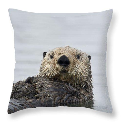 Michael Quinton Throw Pillow featuring the photograph Sea Otter Alaska by Michael Quinton