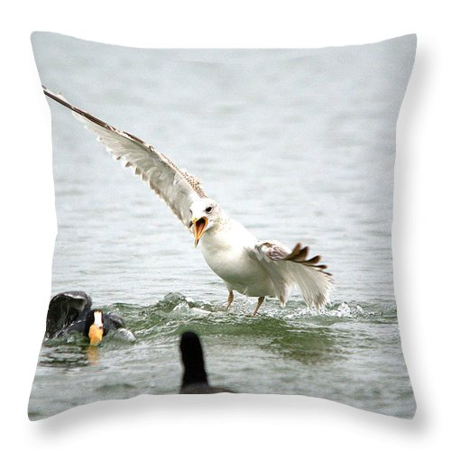 Roy Williams Throw Pillow featuring the photograph Seagull - Mine Mine Mine by Roy Williams
