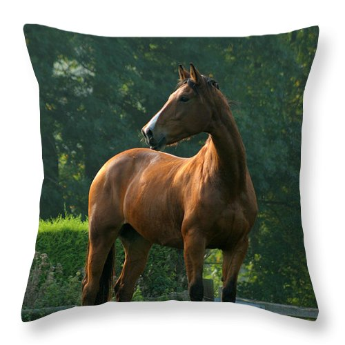 Horse Throw Pillow featuring the photograph Sentinel by Angel Ciesniarska